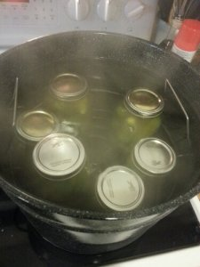 Cucumbers and pickle juice in jars. Lids put on and in the boiling water.